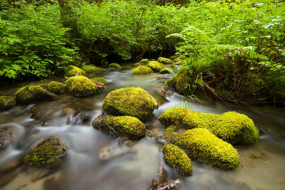 Moss-covered rocks line the bed of a braid of the North Fork Cascade River, Mount Baker-Snoqualmie National Forest, Washington.
