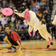 The Flying Houndz Frizbee Trick Dog Show provides the half time entertainment during the Connecticut Sun Vs Phoenix Mercury WNBA regular season game at Mohegan Sun Arena, Uncasville, Connecticut, USA. 23rd May 2014. Photo Tim Clayton