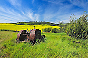 Old farm equipment (tractor) and canola crop on farmland<br /> Baljennie<br /> Saskatchewan<br /> Canada