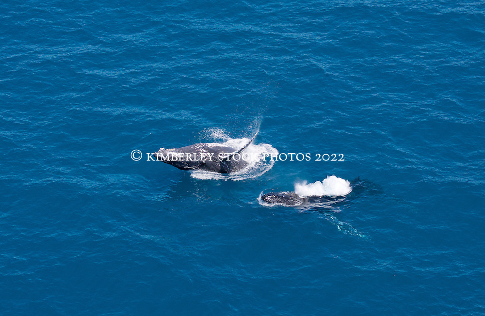 Two humpback whales swim off Broome's Cable Beach.