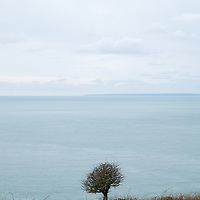 Tree with a sea view