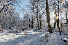 Snow in 's-Graveland, Wijdemeren, Noord Holland, Netherlands
