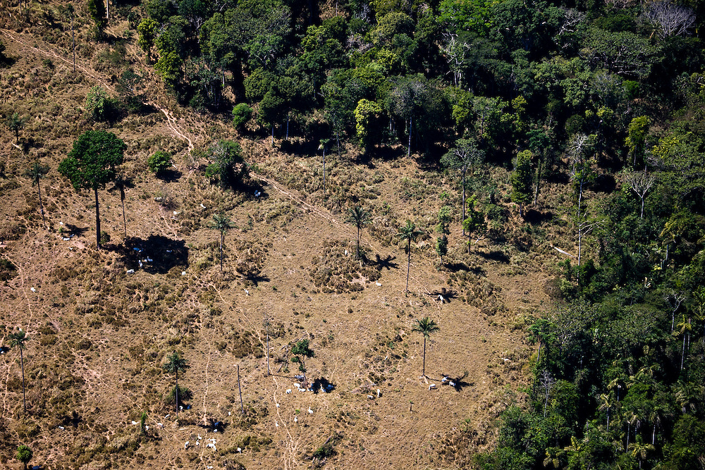 Fazenda Zenetti (cattle farm) in Mato Grosso,m Brazil, August 6, 2008..Daniel Beltra/Greenpeace