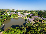 Aerial photograph of the the UQ Lakes & blooming jacaranda trees on the University of Queensland campus, St Lucia, Brisbane, Queensland, Australia