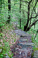 Ticino, Southern Switzerland. Stone path descending through a chestnut forest.