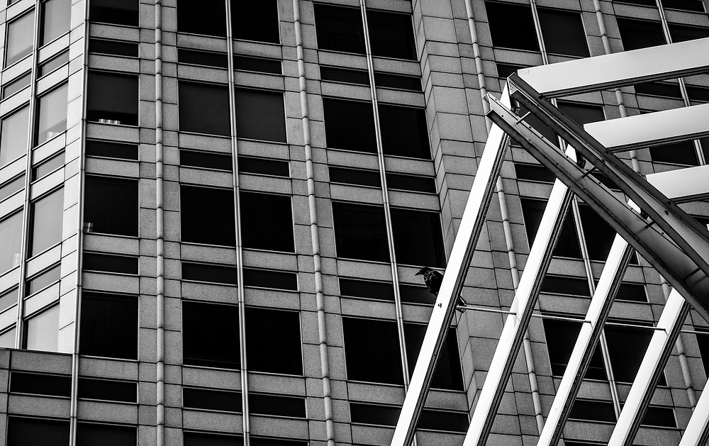 Similar to the Wells Fargo Tower composition #2, this telephoto version creates a more abstract view of the architectural shapes and sets the crow as the focal point.  The image was processed to emulate a print from Agfa APX 100 b&w film.