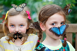 """© licensed to London News Pictures. London, UK 31/03/2014. Children play with butterflies at the Natural History Museum's new exhibition """"Sensational Butterflies"""". The exhibition features over 500 tropical butterflies and a chance to watch butterflies emerge from chrysalises trough a hatchery window. Photo credit: Tolga Akmen/LNP"""