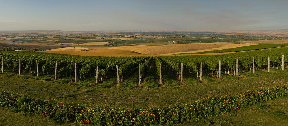 Doubleback vineyards, Walla Walla, Washington