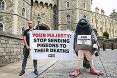 2020-07-01 PETA pigeon racing protest in Windsor