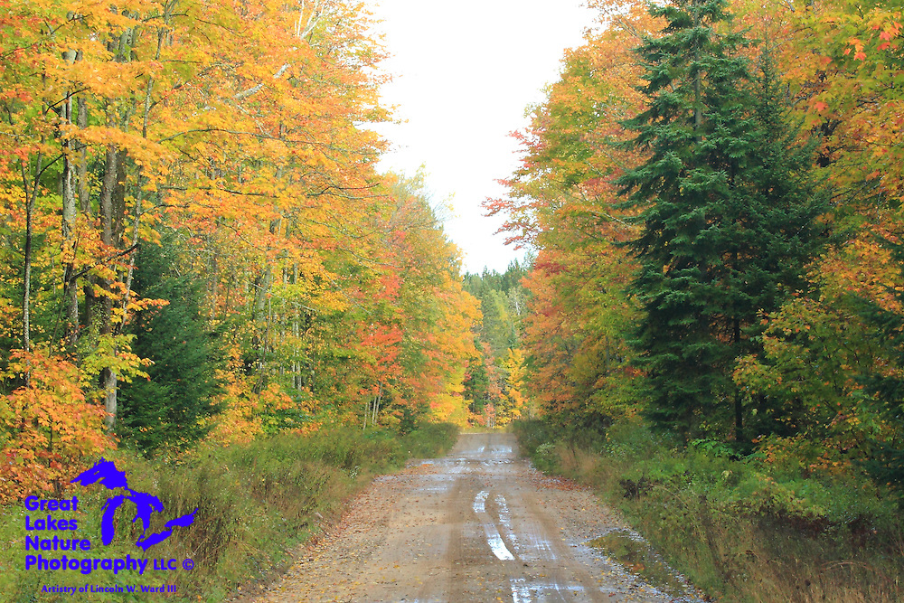 One in a collection of the photographic images of Lincoln W. Ward III from the GLNP Northern Michigan Autumn Tour of 2016.