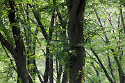 lush green leaves in park during early summer