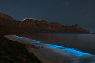 Bioluminescent phytoplankton (noctiluca scintillans) illuminating the ocean along the coast at the Kogelberg Biosphere Reserve near Cape Town, South Africa.