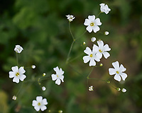 Small Wildflowers. Image taken with a Leica TL2 camera and 60 mm f/2.8 macro lens