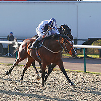Lingfield 8th December 2012