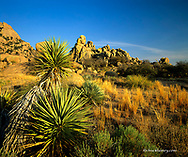 Yucca  and granite boulders at Council Rocks in the West Stronghold of the Dragoon Mountains Coronado National Forest Arizona