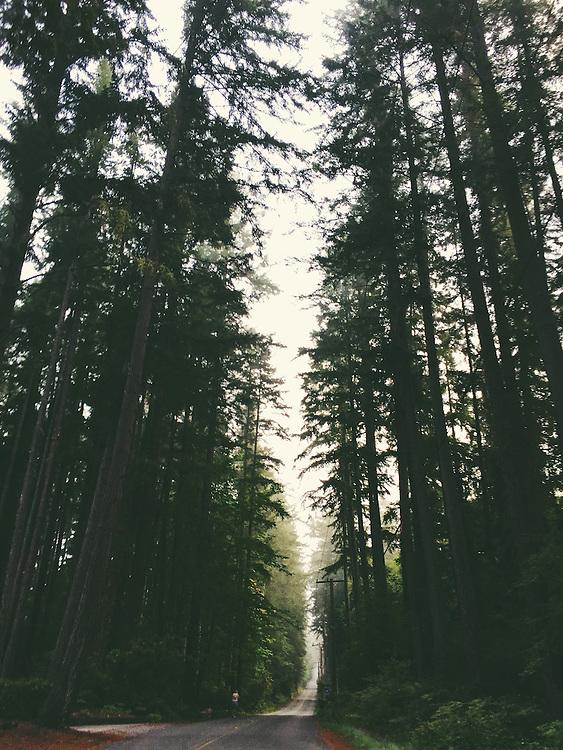 Bainbridge Island, Washington. Taken with an iPhone6