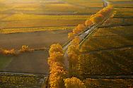 France, Languedoc Roussillon, Gard (30), Uzège, région Uzès, vignobles, route bordée de platanes, vue aérienne