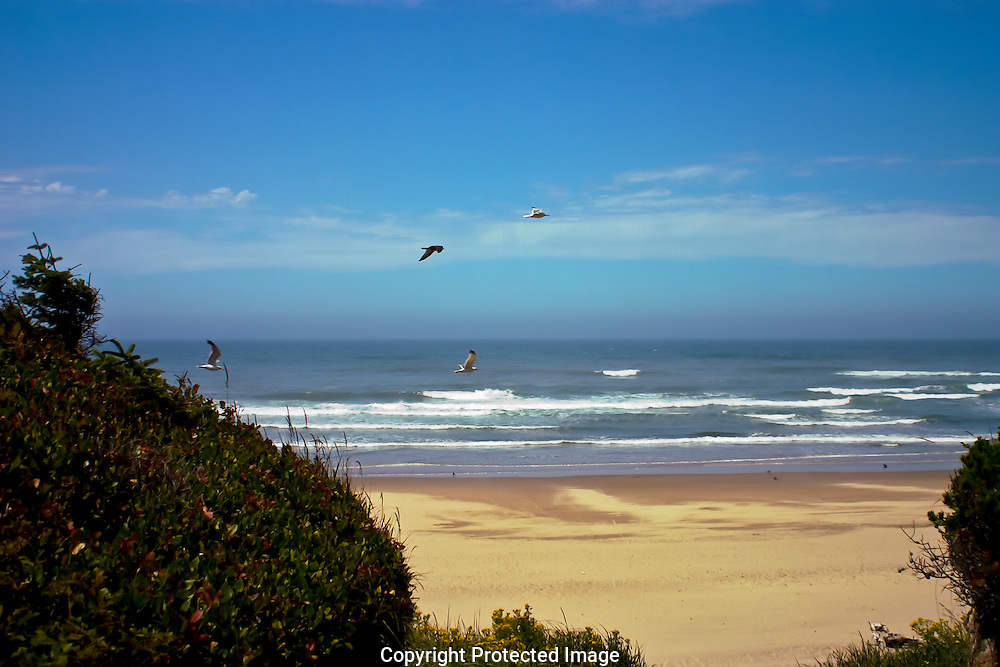 Gulls flying silently above the beach on Oregon's Central coast