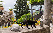 A cat prowls along a garden wall on the Amalfi Coast of Italy