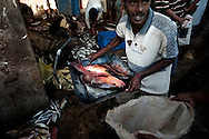 Freshly caught fish is sold at a market in Trincomalee, Sri Lanka, Wednesday, July 1, 2009. With the end of the 26 year old war between the Sri Lankan government and the LTTE, restrictions on fishing lanes have eased, allowing commercial fishers more time in the water to bring in their catch.