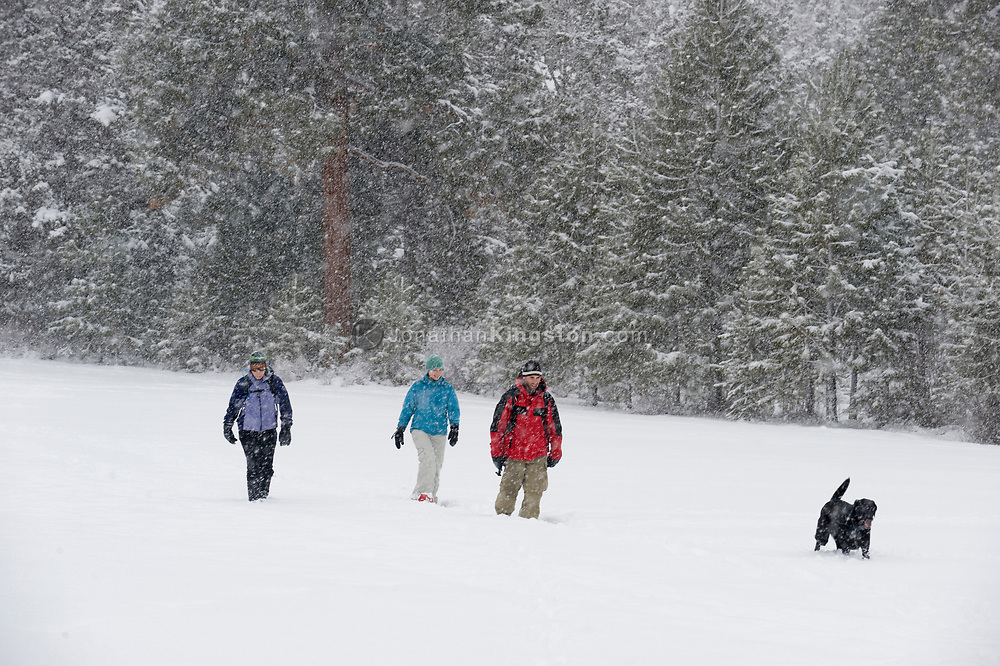 Front view of three adults and one black dog walking on a trail in the snow in Bend, Oregon. (releasecode: jk_mr1036, jk_mr1032, jk_mr1031) (Model Released)