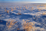 Farmer's field covered in Hoarfrost <br /> near Prince Albert<br /> Saskatchewan<br /> Canada