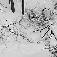 https://Duncan.co/fallen-trees-in-the-snow