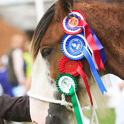 Great Yorkshire Show 2015 Clydesdales