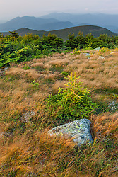 Rocks and sedges on the summit of Mount Moosilauke in New Hampshire's White Mountains.