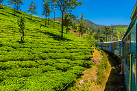 Train trip through the scenic mountains featuring many tea plantations between Nuwara Eliya (Nanu Oya) to Ella, Sri Lanka.