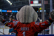 KELOWNA, CANADA - OCTOBER 04:  Rocky Raccoon at the Kelowna Rockets game on October 04, 2017 at Prospera Place in Kelowna, British Columbia, Canada.  (Photo By Cindy Rogers/Nyasa Photography,  *** Local Caption ***