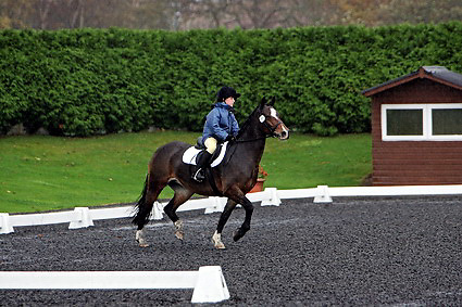 Affiliated dressage at Sheepgate Equestrian Centre..1-11-2009.Horse 266