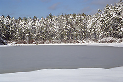 snow covered trees and frozen pond in East Hampton,NY