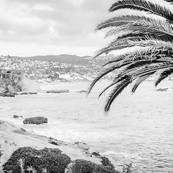 Laguna Beach California black and white panorama photo with palm trees, Pacific Ocean, and the Orange County coastline.