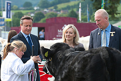 © Licensed to London News Pictures. 21/07/2014. Llanelwedd, UK. David Cameron and Liz Truss - newly appointed Secretary of State for Environment, Food and Rural Affairs since 2014 visit the cattle ringl at the show.  A record numbers of visitors in excess of 240,000 are expected this week over the four day period of Europeís largest agricultural show. Livestock classes and special awards have attracted 8,000 plus entries, 670 more than last year. The first ever Royal Welsh Show was at Aberystwyth in 1904 and attracted 442 livestock entries. Photo credit: Graham M. Lawrence/LNP