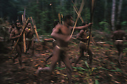 Kombai men dance with bows and arrows in their hands in the early morning of a sago grub festival in Papua, Indonesia. September 2000. The Kombai are a so-called treehouse people, building their homes high up in the trees, and the sago grub festival, during which large quantities of sago grubs are consumed, is their most important religious rite.