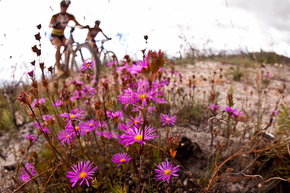 Riders mke their way through the fynbos and over the Groenland Berg mountains during stage 5 of the 2011 Absa Cape Epic Mountain Bike stage race from Worcester Gymnasium to Oak Valley on the 1st April 2011..Photo by Karin Schermbrucker/Cape Epic/SPORTZPICS