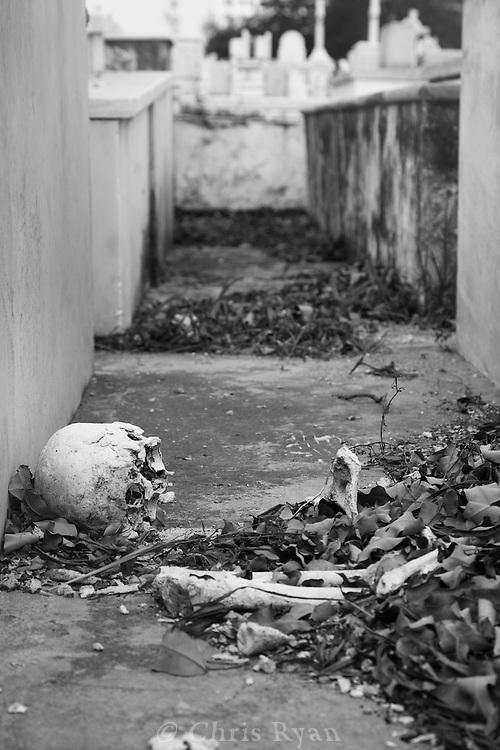 Human bones scattered between graves, Christopher Columbus Cemetery (Necropolis Cristobal Colon), Havana, Cuba