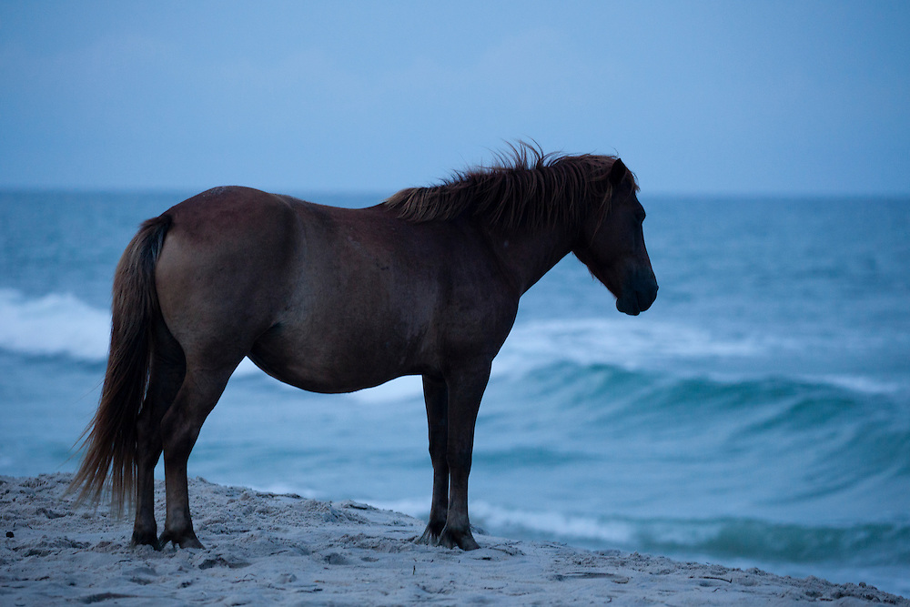 Study of wild horse populations throughout the United States by Alan Winslow.