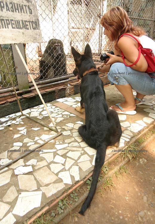 Georgien/Abchasien, Suchumi, 2006-08-25, Ein Hund von Touristen schaut in the Käfig eines Affen. Das Affeninstitut in Suchumi war in der Sowjetzeit ein grosses Forschungsinstitut. Hier wurde u.a. am Rhesusaffen geforscht. Im Krieg wurde das Institut stark beschädigt und viele Tiere befreiten sich. Heute sind die verbliebenen Affen eine Touristenattraktion. Abchasien erklärte sich 1992 unabhängig von Georgien. Nach einem einjährigen blutigen Krieg zwischen den Abchasen und Georgiern besteht seit 1994 ein brüchiger Waffenstillstand, der von einer UNO-Beobachtermission unter personeller Beteiligung Deutschlands überwacht wird. Trotzdem gibt es, vor allem im Kodorital immer wieder bewaffnete Auseinandersetzungen zwischen den Armee der Länder sowie irregulären Kämpfern. (A dog views in a cage of an ape. The Monkey institut of Suchumi was a famous institution of science. The Rhesus monkey was one of the main tasks. DUring the war the institut became badly damaged and many apes fleed. Today the residual monkeys become a attraction for tourists. Abkhazia declared itself independent from Georgia in 1992. After a bloody civil war a UNO mission observing the ceasefire line between Georgia and Abkhazia since 1994. Nevertheless nearly every day armed incidents take place in the Kodori gorge between the both armys and unregular fighters)
