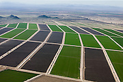 Farms use 68 percent of the 2.4 trillion gallons of water that Arizona uses every year.  Agriculture is a $9.4 billion industry in the state.