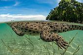 Kimbe Bay Papua New Guinea