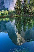 Morning light on El Capitan reflected in the Merced River, Yosemite National Park, California