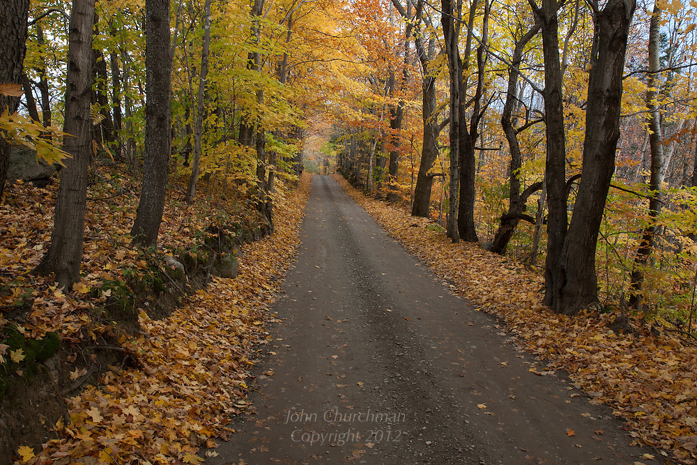 Fall Maple trees along a country road in Vermont