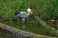 20050427 NED: Vogels in de buurt, Opbuuren Maarssen