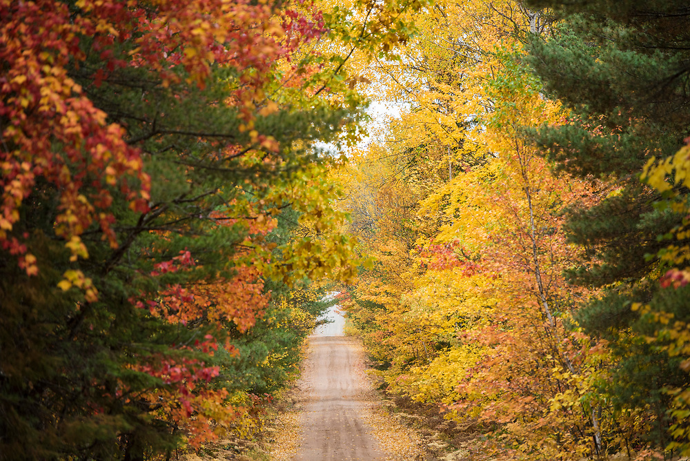 Fall color tunnel of trees near Big Bay, Michigan.