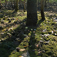Manguezal na Estacao Ecologica de Carijos, Florianopolis, Santa Catarina, Brasil, 07/09/2004 foto de Ze Paiva/Vista Imagens