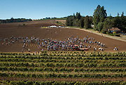 Aerial view over Willamette Valley Vineyard's  Groundbreaking Celebration for Plant a Pinot Noir vine at the groundbreakingfor the new site of Elton Winery Eola Hills AVA, Willamette Valley, Oregon