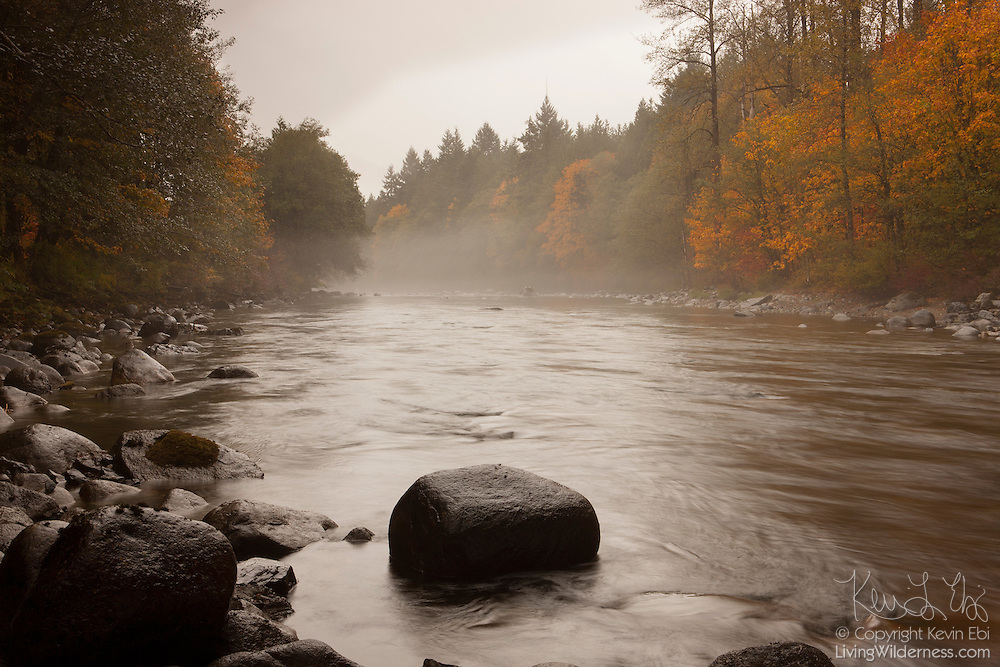 Fog begins to form over the South Fork Skykomish River near Skykomish, Washington. The river is lined by maple trees that are beginning to show their fall colors.