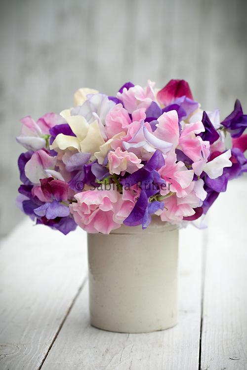 Lathyrus odoratus 'Summer Scent Mix' - sweet pea arrangement in small earthenware jar